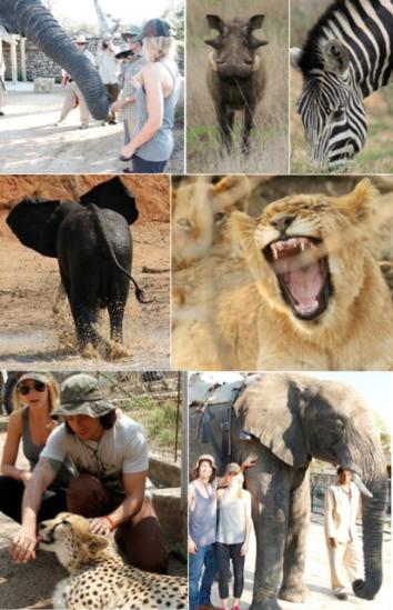 safari camp1